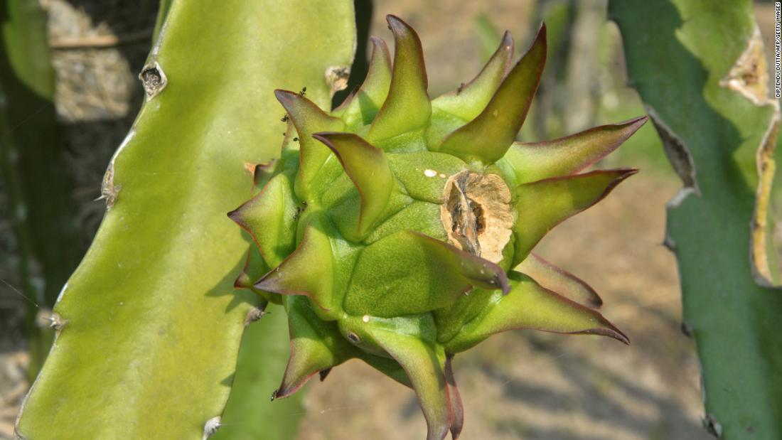 An Indian state renames dragon fruit to avoid association with China